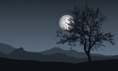 mountains with tree and full moon